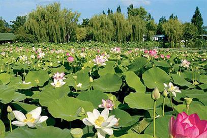 parc floral court d aron saint cyr en talmondais