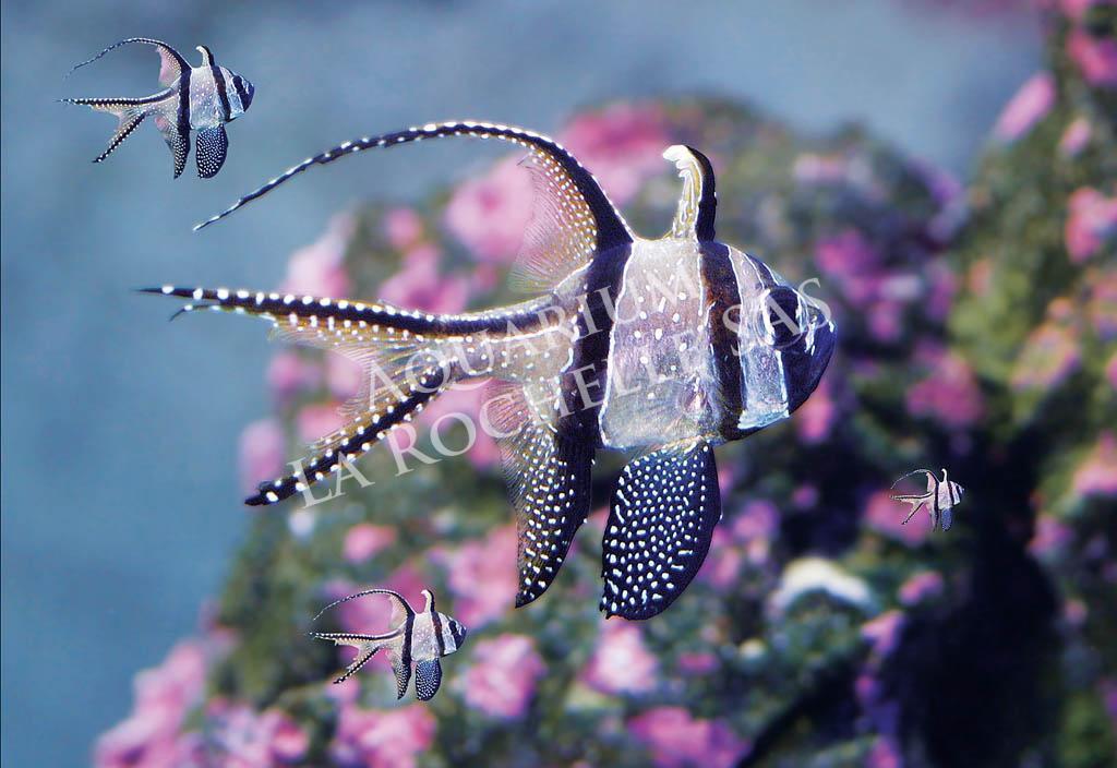 Aquarium de la rochelle proche du camping