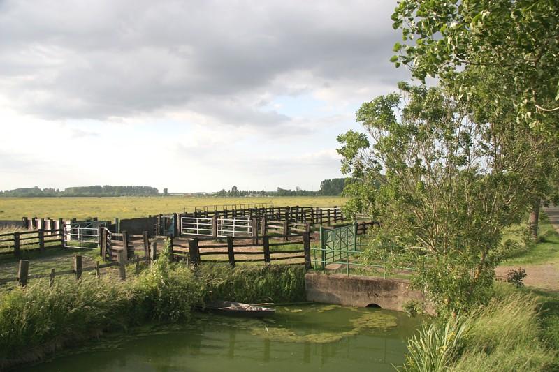 Paysage typique du marais poitevin à visiter à partir du camping